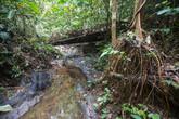 Výlet: Borneo - Skrz kouřovou clonu za zlatokopy do pralesa